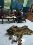 Tiger Traders Busted in Indonesia